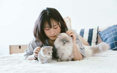Best Packing Tips For Pets | International Moving Tips With Pets